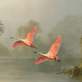 Roseate Spoonbills Of Florida by Spadecaller