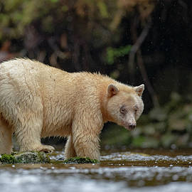 Spirit Bear by Pam Mullins