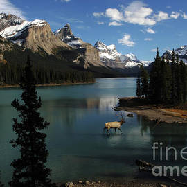 Spirit Island Maligne Lake Jasper by Bob Christopher