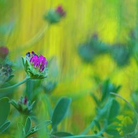 Spring garden by Cesar Torres