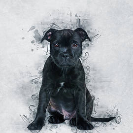 Staffordshire Bull Terrier by Ian Mitchell