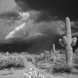 Stormy Southern Skies by Cathy Franklin