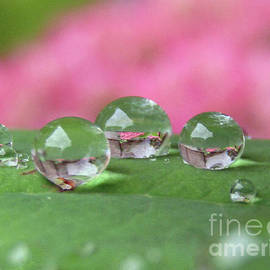 Summer Rain by Kim Tran