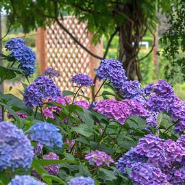 Summer Romantic Gardens by Jenny Rainbow