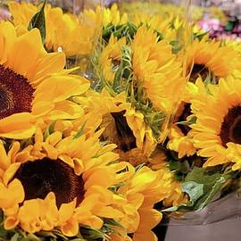 Sunflower Bunch by Charlotte Gray