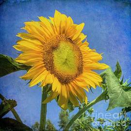 Sunflower Glory by Luther Fine Art