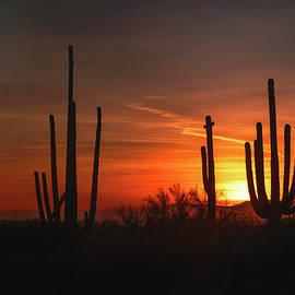 SunSet Through The Saguaro  by Saija Lehtonen