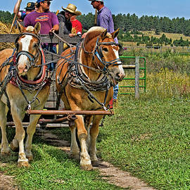 Draft Horse Team  by Alana Thrower