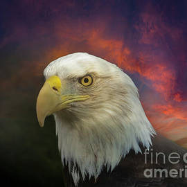 The Bald Eagle by Mitch Shindelbower