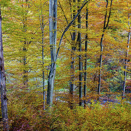 The enchanted forest by Cosmin Stan