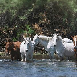 The Wild Of Arizona  by Saija Lehtonen