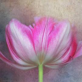 Tulip Underside by Terry Davis