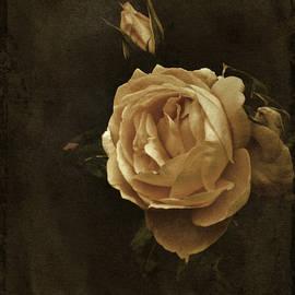 Vintage Rose by Richard Cummings