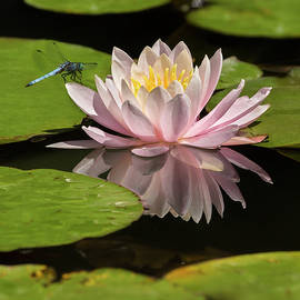 Water Lilly Landing by John Rogers