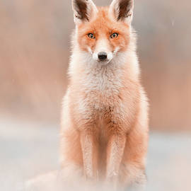 What Does The Fox Think by Roeselien Raimond