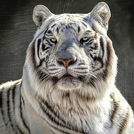 White Tiger Portrait by Donna Kennedy