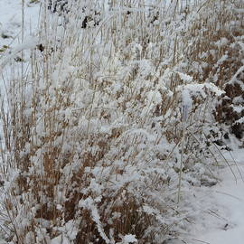 Winter Grasses by Barbara Ebeling