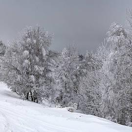 Winter magic by Ovidiu Adrian Bujor
