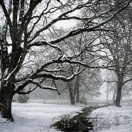 Winters Grip by Steven Clark