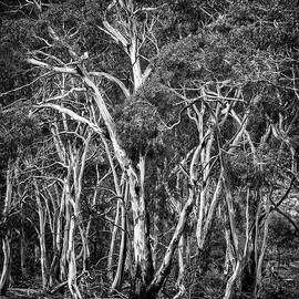 Yellow Gums by Bette Devine