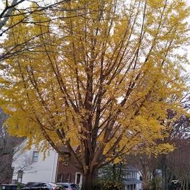 Yellow Splendor by Charlotte Gray