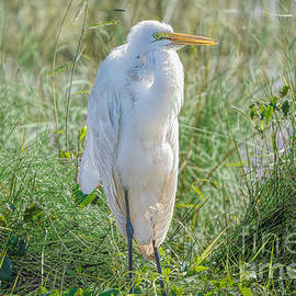 Young Egret by Judy Kay