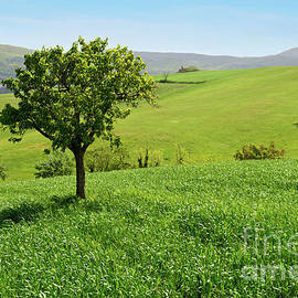 Beautiful spring landscape in Tuscany by Beautiful Things