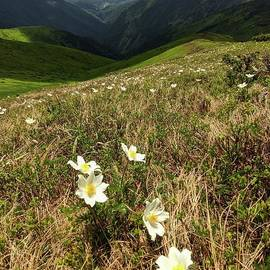 Meadow of flowers by Julia Bernardes