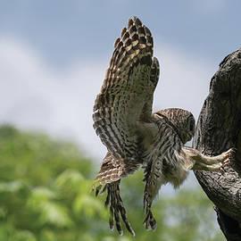 Precision Landing by Puttaswamy Ravishankar
