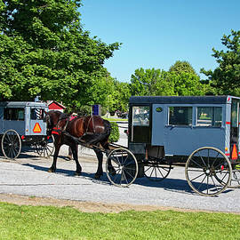 Amish Buggies by Sally Weigand