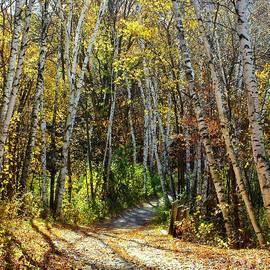 Autumn Colors, Minnesota by Ann Brown