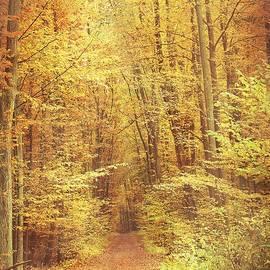 Autumn Forest #5
