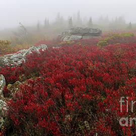 Bear Rocks Preserve by Tom Gallovich