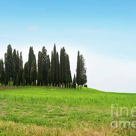 Beautiful spring minimalistic landscape with Italian Cypress in Tuscany by Beautiful Things