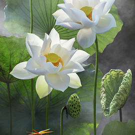 Beautiful white lotus flower in lake with small a dragonfly by Le Manh Thang