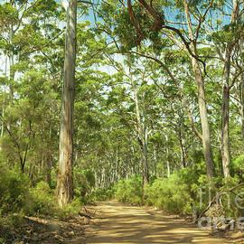 Boranup Forest, Nr. Margaret River, Western Australia by Elaine Teague