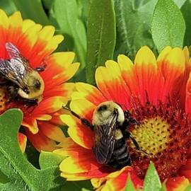 2 Busy Bees by Charlotte Gray