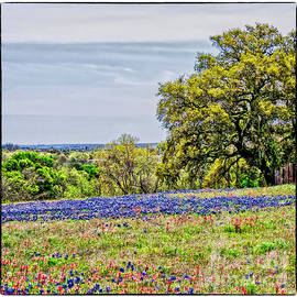 Hill Country Scenic by Gary Richards