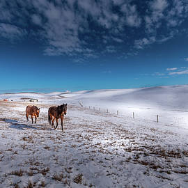 Horses on the Palouse by David Patterson