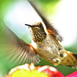 Hummingbird by Rob Mclean