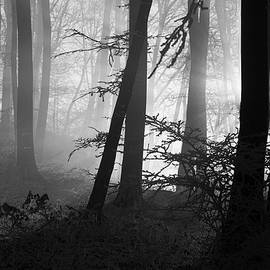 Mysterious frozen forest by Dane Walker