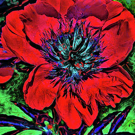 Red flower. by Andy i Za