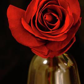 Rose # 6. by Alexander Vinogradov