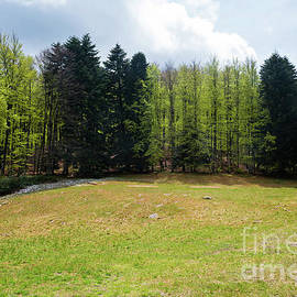 Trees in Amiata Mountain in spring season, Tuscany by Beautiful Things