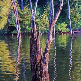 Weathered Wood on Water by Christopher Hignite