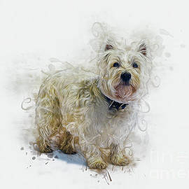 West Highland White Terrier by Ian Mitchell