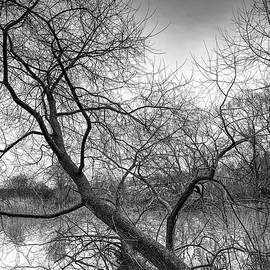 2020 new years day BW #j4 by Leif Sohlman
