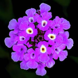 Flowers by Al Ungar