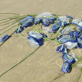 Blue jellyfish by Steve Estvanik