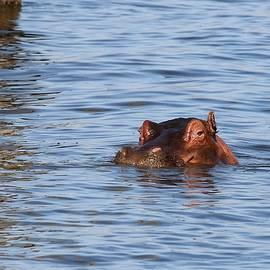 Hippopotamus by Debbie Blackman